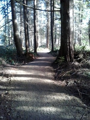 New trail system in North Courtenay