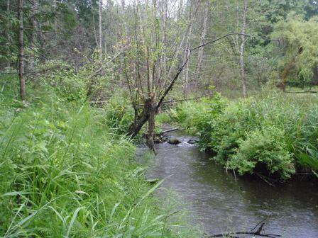 Upcoming Riparian Areas Regulation Methods course