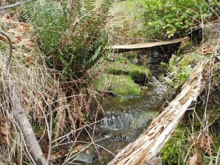 Riparian Areas Regulation Methods course scheduled for Nanaimo