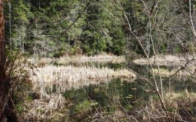 Wetlandkeepers course comes to Courtenay