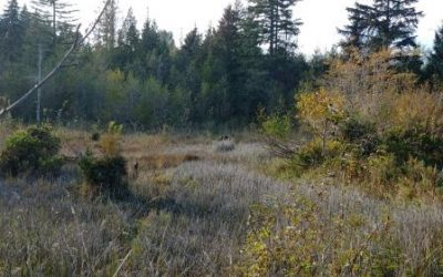 Upcoming Wetlandkeepers course in Cumberland